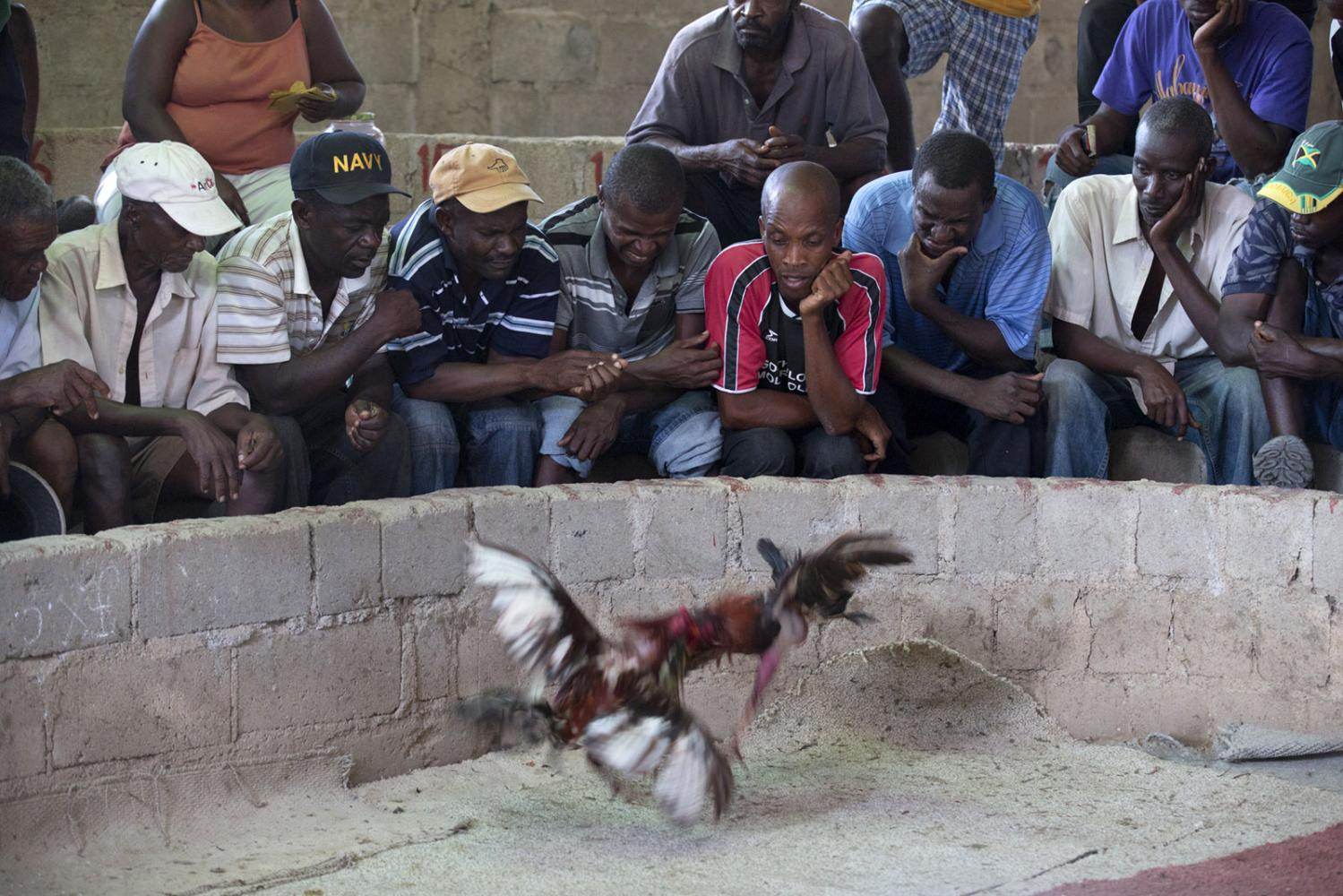 Various reactions at a cock fight in Milot, Haiti.