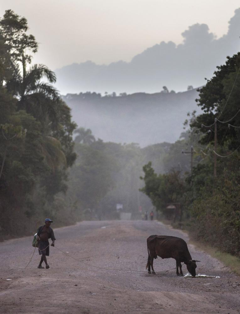 A man on the street with his bull in Milot, Haiti.